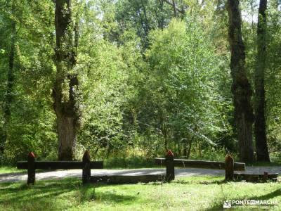Vuelta al Senderismo-Valle Lozoya; madera tejo ruta montaña madrid ruta de senderismo madrid buitrag